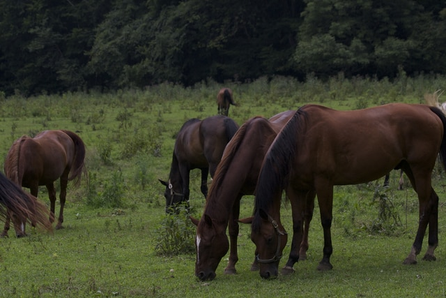 Lost Acres, Triple B Ranch harbor hope for abused horses in Chillicothe