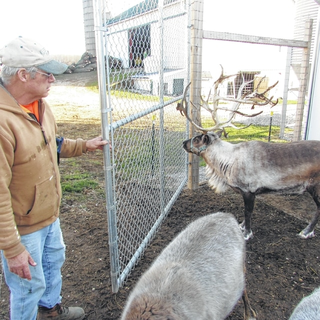 Kleerview Farm in Bellville looks to give customers Christmas experience