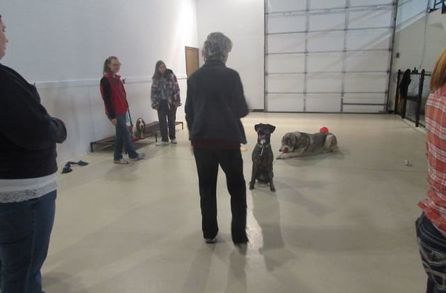 The perfect partnership: Dogs paired with developmentally disabled