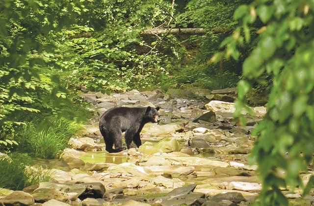 Bears making their way into southern Ohio