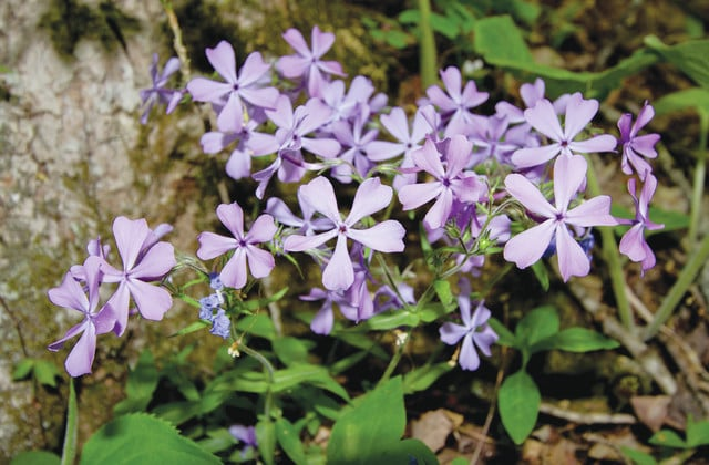 Top 15 spots to see Ohio's wildflowers