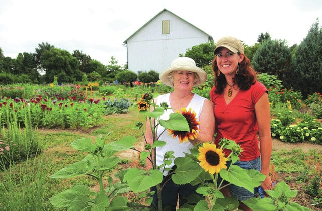 Flower farms spring up in record numbers in Ohio
