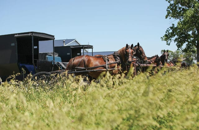 Bidding for broccoli: How to buy your produce at an Amish auction