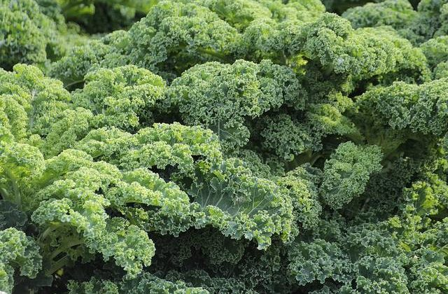 You can't have your kale and eat it, too