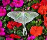 Small but mighty: Moths have a big role to play