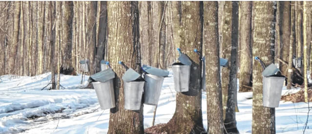 According to the U.S. Department of Agriculture, only 12 states produce tapped maple syrup. Ohio ranks 5th in the nation in number of taps with 660,000.