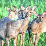 CDC: Avoid 'zombie' deer meat