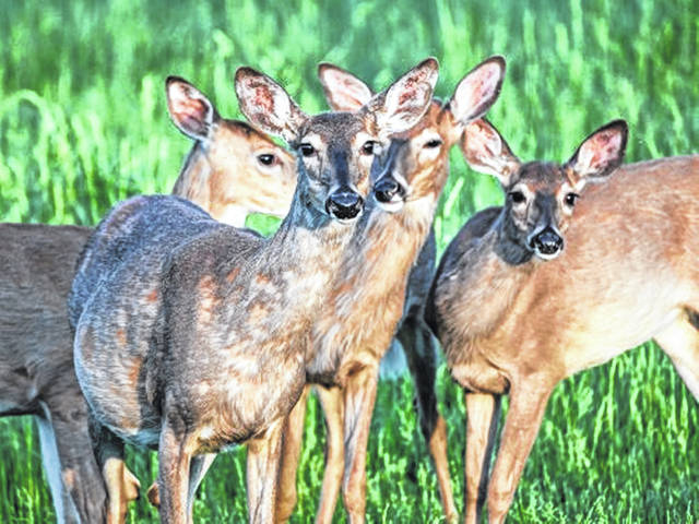 "Ohio's current status designation for deer is ""chronic wasting disease-free in the wild."" There have been reported cases in three surrounding states: Michigan, West Virginia and Pennsylvania, according to the CDC. The disease has been detected in 24 states."