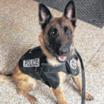 'Pennies for Protection' vests area canine units
