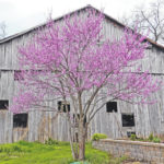 Get ready for Redbuds