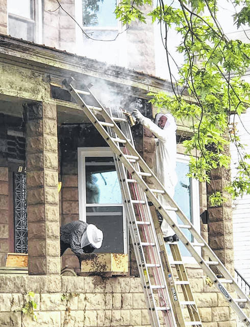 Two men, one of whom was in his 80s, recently removed an old bee hive from a house on Front Street in Middleport. According to photographer Christina Coglietti, the men first worked with only protection over their faces, then one put on a suit before smoking out the remaining bees from the hive. It is a hobby for both men.