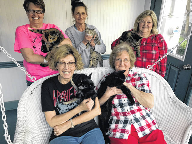 """Not your typical """"cat ladies,"""" pictured standing, from left, are SNAP Board of Directors Angie Queen, Patty Jones and Gail Belville; sitting, from left, Chris Cozza and Betty Halley."""