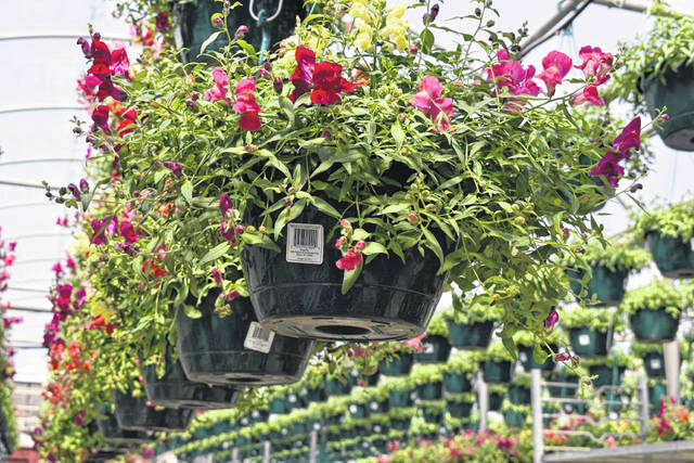 Flowering hanging baskets will soon grace garden centers across the region like the ones shown here at Bob's Market.