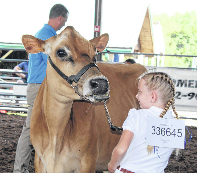Alyssa Richards shows her cow during the 2019 Meigs County Fair.