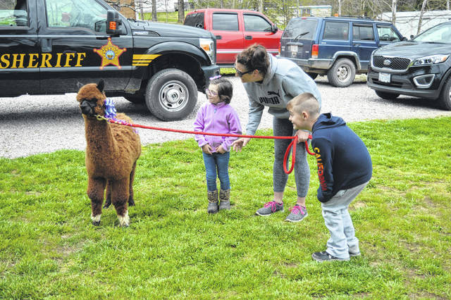 The Blazer family prepares to walk their new alpaca.
