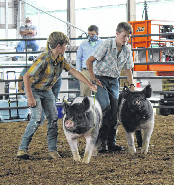 Exhibitors show hogs during the 2020 Meigs County Fair.