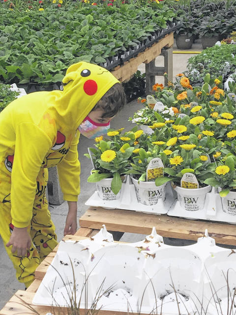 Pikachu, also known as Sammy Chambers, was very excited by the yellow flowers during his visit to Norris Greenhouses.