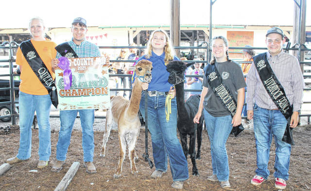 Cassidy Bailey was named the Grand Champion for her alpaca project during Friday evening's alpaca show. Bailey showed two alpacas, taking them around the ring and through an obstacle course before answering questions from the judge.