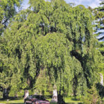 Arboretums – day trips for gardeners