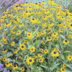 Landscaping that can survive drought