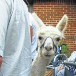 Farmers Market to have special visitor this week