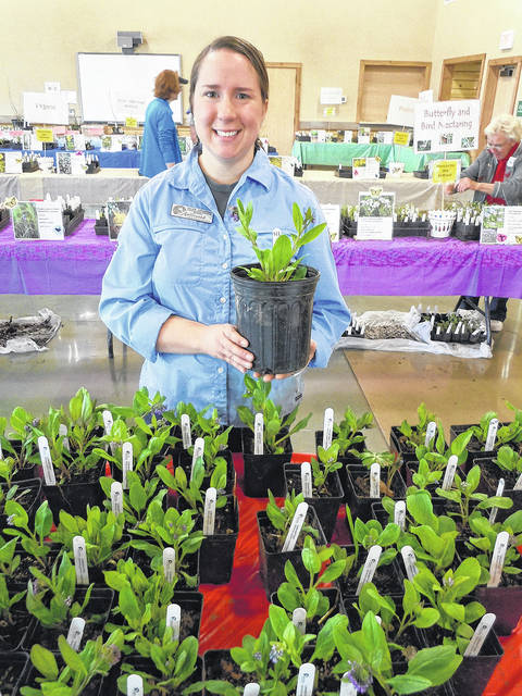 Sarah Alverson shows off Virginia Bluebells, just one of the many plants available at Aullwood's Native Plant Sale on April 21.