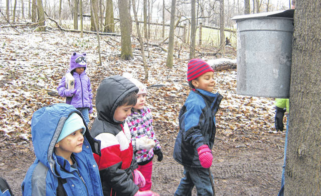 Sugar maple sap is collected in containers during Sugarbrush Walks in February.