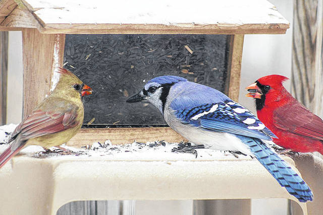 Project Feeder Watch is Thursdays and Fridays, March 14, 15, 28 and 29 from 9:30 – 11:30 a.m.