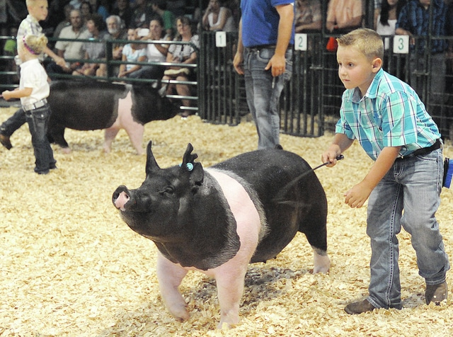 Anthony Weber | Troy Daily News Dylan Hollowell won Grand Champion with his gilt during the Miami County Born and Raised Open Gilt show at the 2015 Miami County Fair on Friday in Troy.