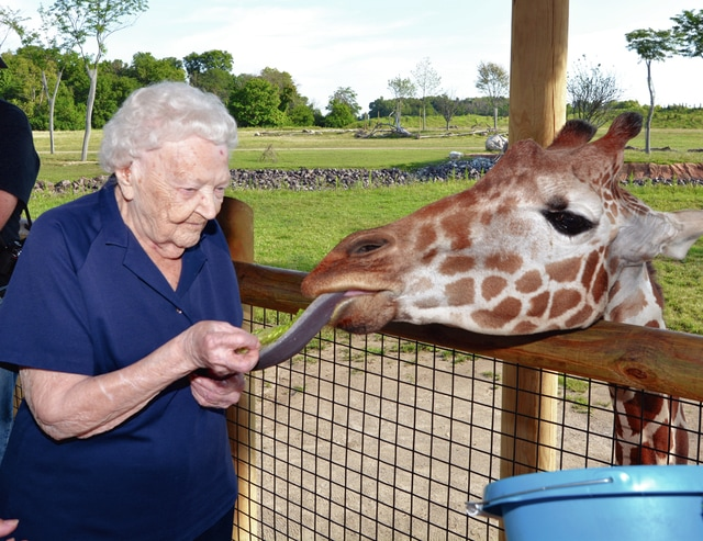Provided photo Margery Rose, a resident at Brookdale Troy, recently fulfilled her wish to visit the Columbus Zoo and have a hands on experience with the animals. She got to feed the giraffes, hold a baby cheetah and see her favorite animal of all, the gorilla.