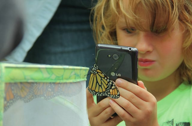 Moriah Munroe, 7, of Troy, takes a photo of a monarch butterfly that was going to be tagged on her smart phone. Close engagements with monarch butteflies, such as this one, are becoming rare due to their rapid decline in the U.S.