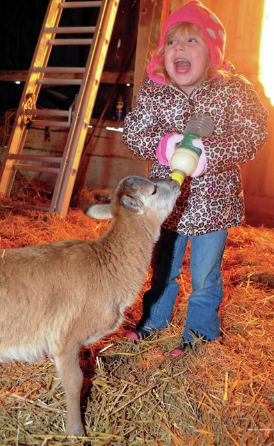 Mike Ullery/Civitas Media Three-year-old Miley Ullery bottle feeds a young goat at Fulton Farms on Saturday where volunteers are preparing for a a live Nativity at the farm, beginning at 6:30 p.m. on Christmas Eve. The event is being put on by members of the Church of Jesus Christ of Latter Day Saints.