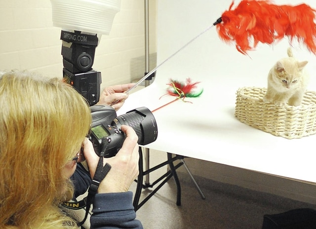 Anthony Weber   Troy Daily News Donna Meade captures an image of a kitten Friday at the Miami County Animal Shelter. Meade owns Donna Meade Photography and continues her passion for pets and specializes in pet photography.