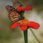 Plant a pollinator garden and enjoy benefits