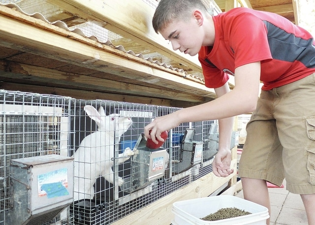 Anthony Weber   Troy Daily News Colin Tackett feeds his New Zealand rabbits recently at his home in Pleasant Hill.