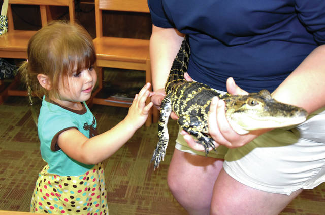 "Cody Willoughby | Troy Daily News Sophie Hedrick, 3, of Troy pets Carl the American alligator during ""Croc Talk,"" a special program presented by the WAVE Foundation on Saturday at Troy-Miami County Public Library."