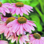 Twelve must plant pollinator-friendly flowers