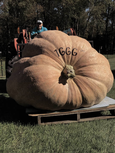 Harley Weldy, of Covington, carefully places his award winning 1,666 pound giant pumpkin on a pallet. Weldy grew the second largest giant pumpkin at a sanctioned weigh-off at the Hamilton Operation Pumpkin festival held Oct. 12-14.