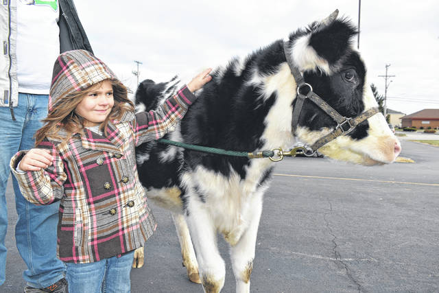 Cody Willoughby | AIM Media Midwest Zailey Schauer, 5, of Union City pets Annie the Highway Cow during a meet-and-greet on Saturday at Tractor Supply Co. in Troy.