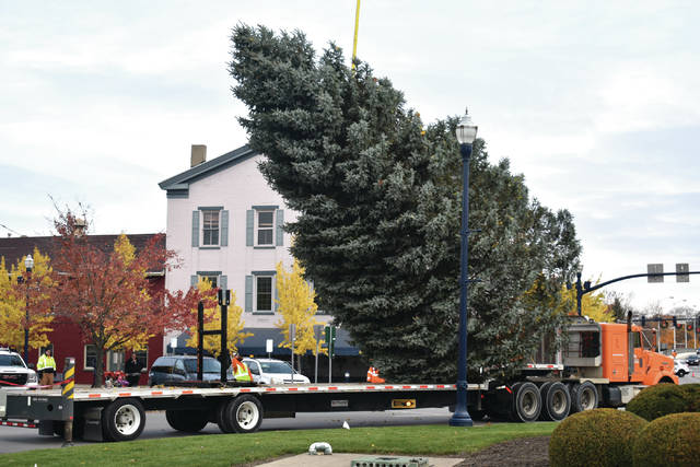 Cody Willoughby | Troy Daily News City of Troy Park Department workers hoist this year's downtown Christmas tree off the flatbed truck on Tuesday in the Troy Public Square. The 42-foot blue spruce was donated by Troy resident Fred Young. The tree was originally planted by Young's grandson as a third-grade Earth Day project at Young's residence in 1990. The tree will be officially lit during the Grand Illumination ceremony on Friday, Nov. 23.