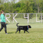 Bark For Life set for Saturday