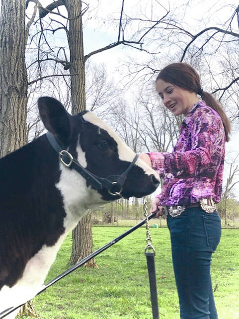 """Cora Moore, 13, of Casstown, sets up her dairy beef feeder """"Stitch"""" on her farm last weekend. Moore was taking photos and video of her cattle projects to submit online for a """"Virtual Cattle Battle"""" to be judged by the Ohio State University livestock judging team."""