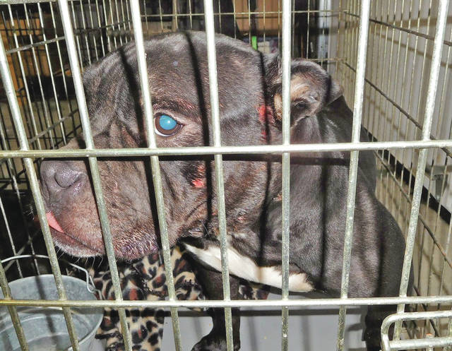 Some of the dogs that were confiscated Sunday from the Peebles home of a former Hillsboro resident are shown in these photographs.