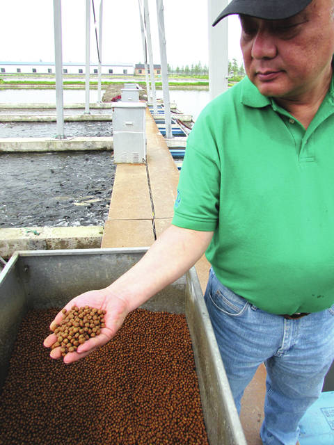 Jim Zhang of the U.S. Soybean Export Council, holds a handful of fish feed at an aquaculture facility on the outskirts of Shanghai, China in April, 2016. <em>Rural Life Today</em> editor Gary Brock toured the Chinese fish farm facility to see where much of Ohio's soybeans go when exported to China. The fish feed is made of about 50 percent soy meal.