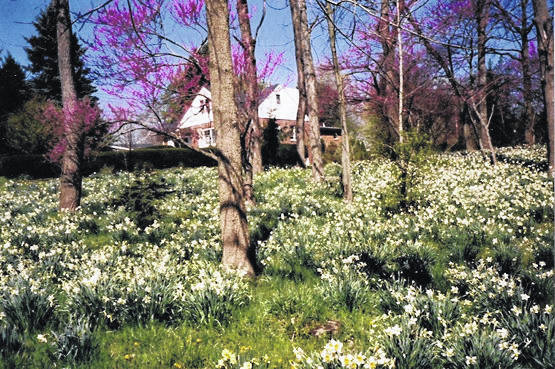 The Wills home epitomizes the beauty of spring.