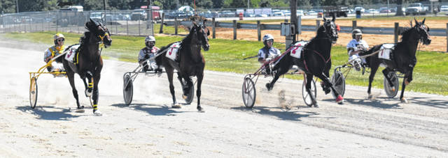 The two-year-old colts trot their way around the race track on Sunday at the Clinton County Fair.