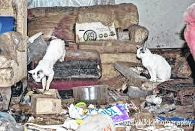 The former owners face an array of charges for animal abuse.