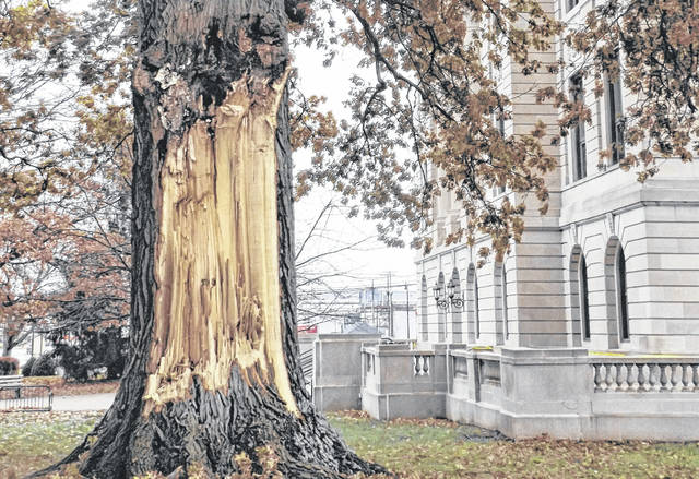 The Nov. 15 ice storm proved to be the undoing of one of the most familiar trees of Clinton County — the old oak tree that for generations has stood alongside the center of downtown Wilmington.