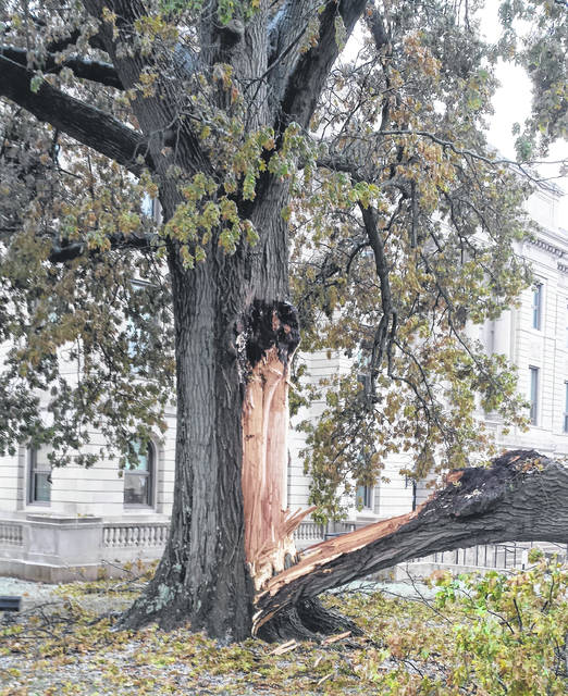 An ice storm caused significant damage to the historical tree.