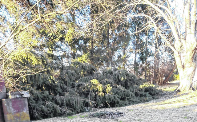 It was a windy weekend in Clinton County, and this 45-foot pine tree came crashing down on Xenia Avenue in Wilmington.